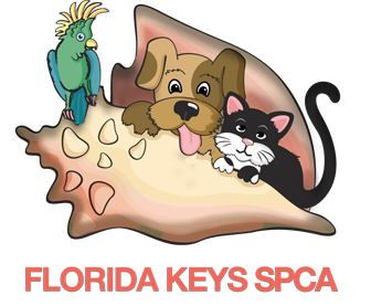 Fundraising Software Review - Florida Keys SPCA