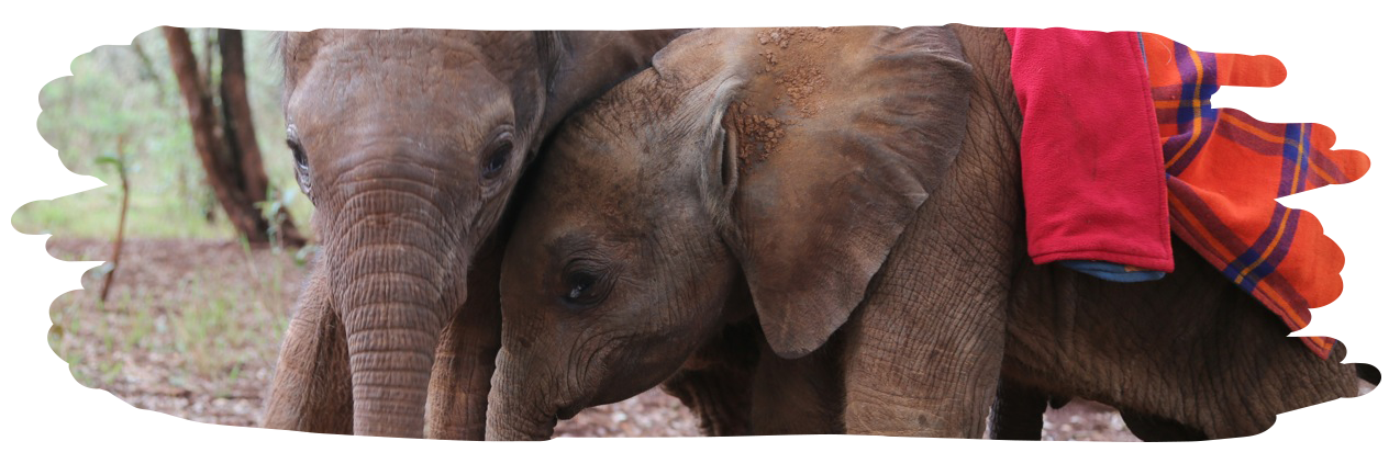 David Sheldrick Wildlife Trust Giving Tuesday Campaign