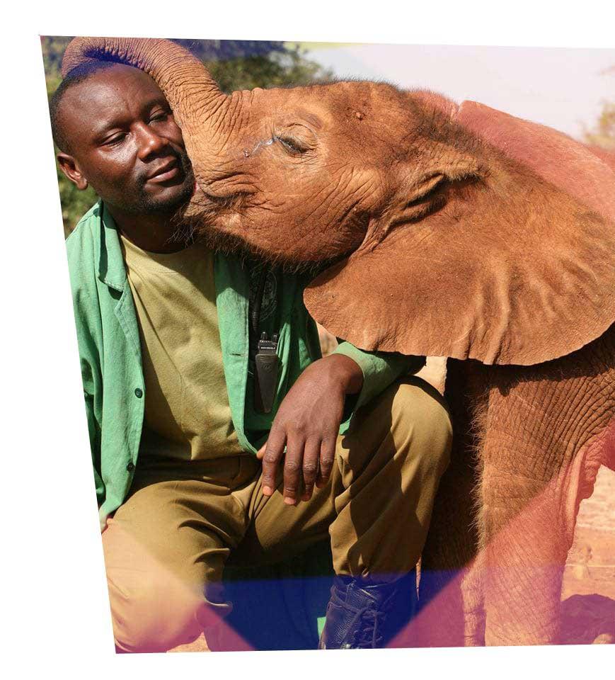 elephant kissing a man