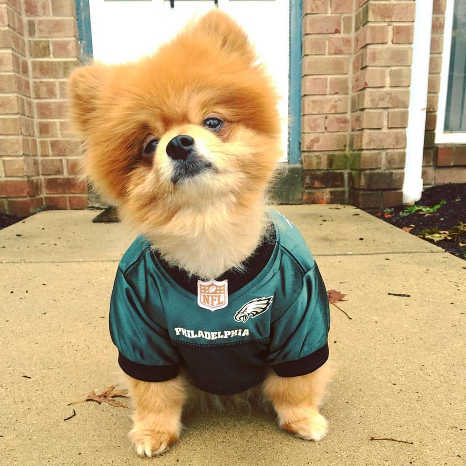 Love and Fund-erdogs: 6 Ways The Philadelphia Eagles Give Back